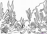 Seaweed Outline Drawing Coloring Pages Step Draw Outlines Egg Coral sketch template