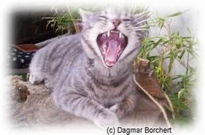 Kochen Für Katzen : katzen schonkost bei chefkoch de ~ Lizthompson.info Haus und Dekorationen