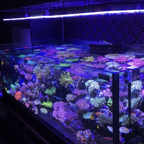 saltwater tank lights orphek atlantik v3 plus reef aquarium led lighting wifi