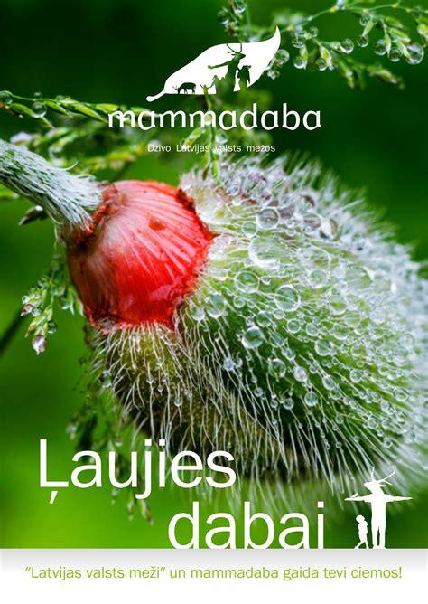 Ļaujies dabai by Latvijas valsts meži - Issuu