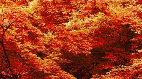 Fall Backgrounds For by Fall Desktop Background Hd Desktop Wallpapers 4k Hd