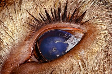 photo insight  jim brandenburg dead deers eye