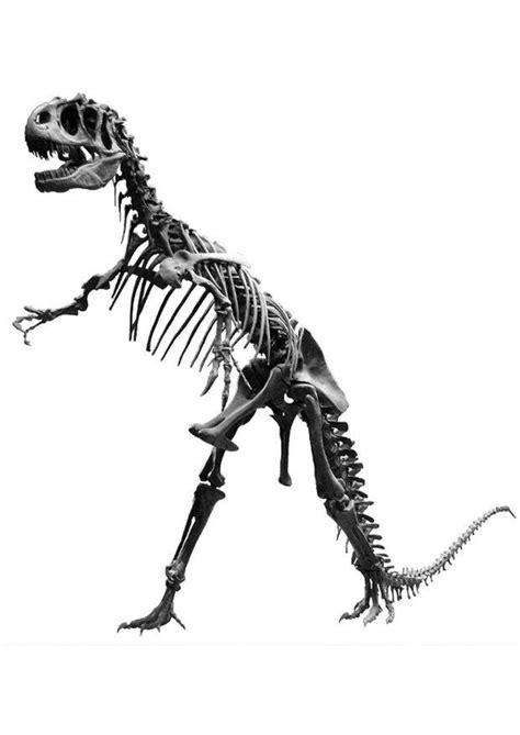 Allosaurus Kleurplaat by Foto Allosaurus Skelet Afb 7211 Images