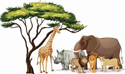 Jungle Animals Theme Clipart Animal Camp Shac