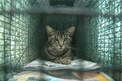 stray cat trap humane trapping trapping basics feral cat focus