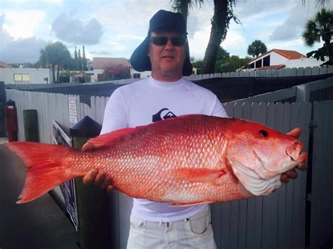 Red Snapper Fishing Charters Liquid Lifestyle Charters