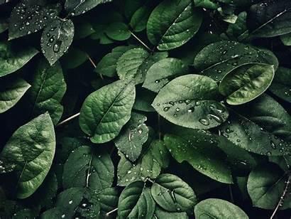 Environmental Education Definition
