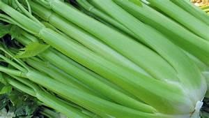 Culture Celeri Branche : c leri branche bejo france ~ Melissatoandfro.com Idées de Décoration