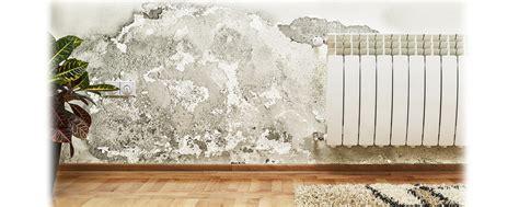 moisissure chambre moisissure mur chambre comment liminer la moisissure sur