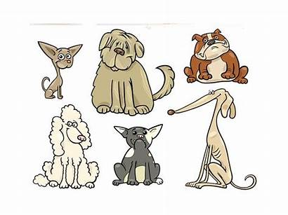 Dog Breeds Many Dogs There Least Popular