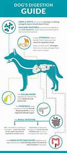 Dog Mouth Anatomy Diagram