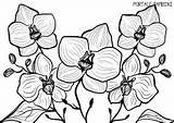 Orchid Coloring Pages Printable sketch template