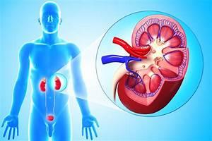 Лечение пиелонефрита при сахарном диабете антибиотиками