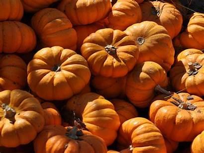 Pumpkins Pumpkin Fall Wallpapers Autumn Desktop Wallpapersafari