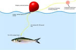 Live-Bait Fishing Rigs