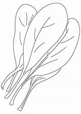 Spinach Coloring Pages Common Vegetables Printable sketch template