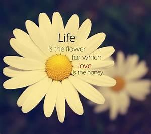 Flower Bloom Quotes. QuotesGram
