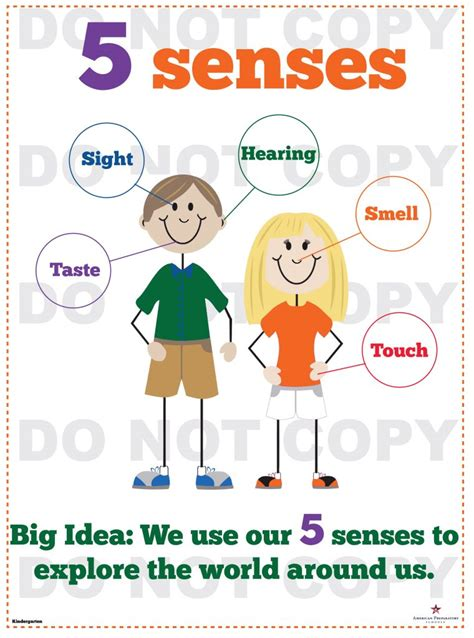 senses kindergarten american preparatory schools