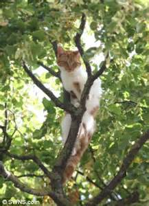 cat stuck in tree firefighters and rspca called out for 2 hour operation to