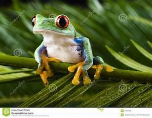 Frosch Bilder Lustig : roter frosch lizenzfreies stockbild bild 1940456 ~ Whattoseeinmadrid.com Haus und Dekorationen
