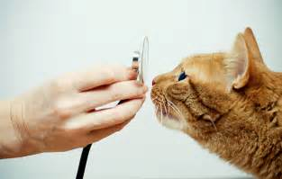 how much is a vet visit for a cat vet visit top tips for keeping your feline calm