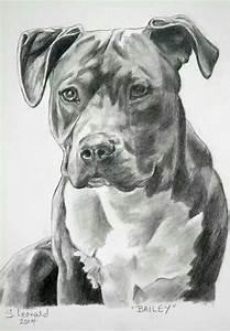 Sketch of a pitbull | Pitbulls in 2018 | Pinterest ...