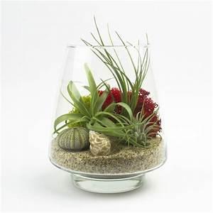 Pflanzen Für Terrarium : pflanzen terrarium selber machen schritt f r schritt anleitung ~ Orissabook.com Haus und Dekorationen