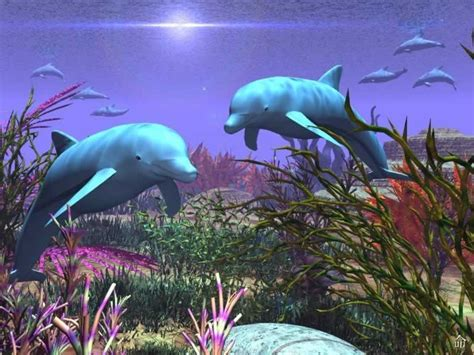 3d Animal Wallpaper 3d Fish Wallpaper - collected wallpaper 3d animal wallpaper 3d fish