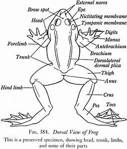 Frog Pre Lab  Lab