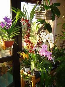Orchideen Ohne Topf : orchideen rettung haus garten forum ~ Eleganceandgraceweddings.com Haus und Dekorationen