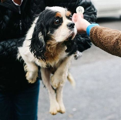 dogs abused rescued breeding farm animals better