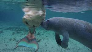 Real Life Mermaid Photo Gallery « Professional Mermaid For ...