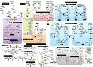 A Schematic For M  Pneumoniae Metabolism  U00ab Bunnie U0026 39 S Blog