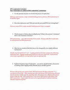 31 Dna Rna And Replication Worksheet Answer Key