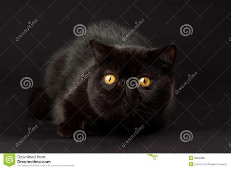 black cat stock photo image of background 9350946