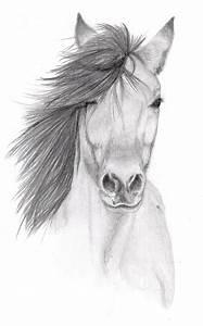 Horse Pencil sketch by Vulpes-Corsac on DeviantArt