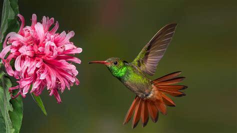 hummingbird san diego zoo animals plants