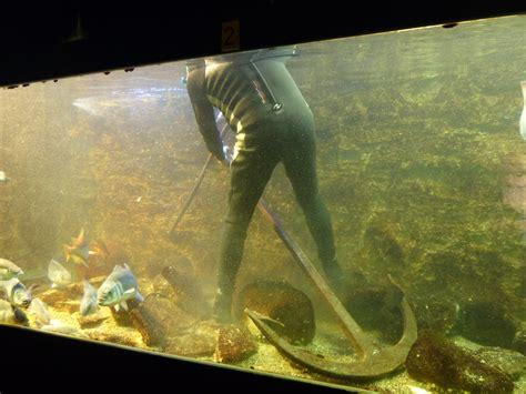 aquarium dans le calvados une ancre coule dans les aquariums estran cit 233 de la mer