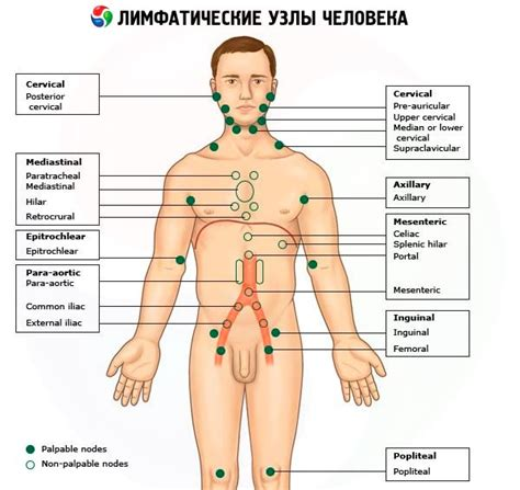 Mediastinal Lymph Nodes In Chest
