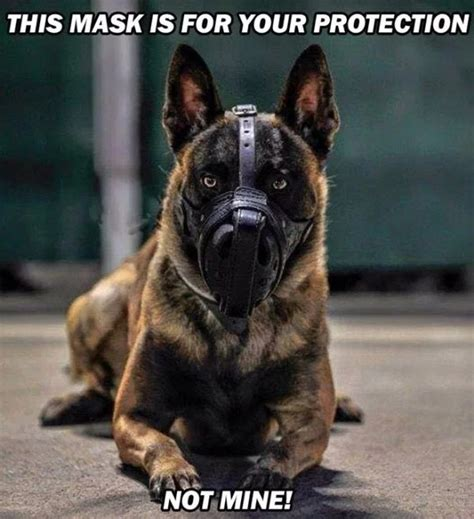 funny service dog memes barnorama