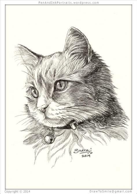 feline mystique  young cat  hypnotic eyes