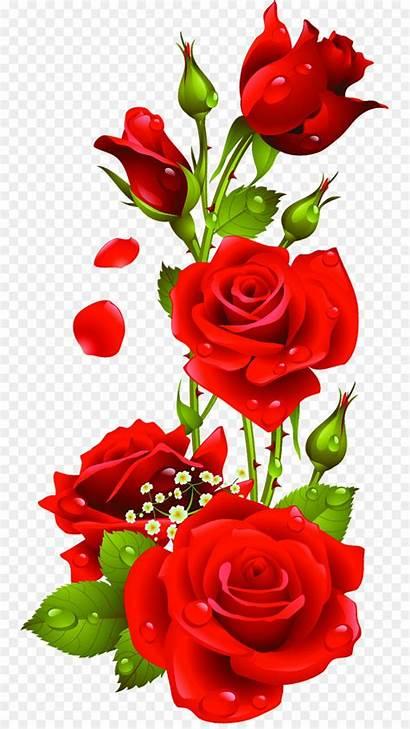 Rose Clip Flower Cleanpng