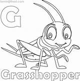 Grasshopper Coloring Pages Printable Getcolorings Print sketch template