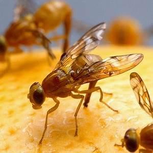 Wespen In Der Wohnung : insekten in der wohnung ace zydek ~ Whattoseeinmadrid.com Haus und Dekorationen