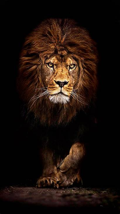 Lion Mufasa Phone Mobile Wallpapers Iphone Ultra