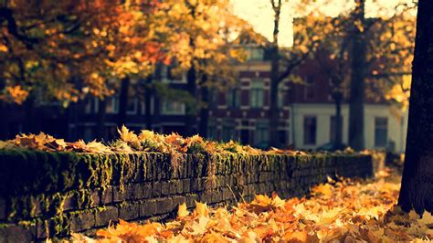 nature leaves autumn fall seasons trees wall stone