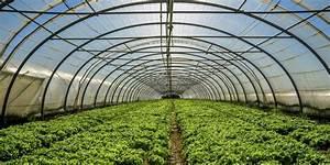 Greener Greenhouses To Feed The Future