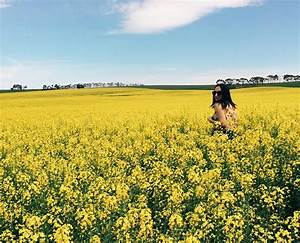 These, Amazing, Yellow, Fields, Are, What, Instagram, Dreams, Are