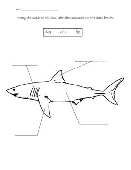 ocean animals structure labeling worksheets  maestra mariposa tpt