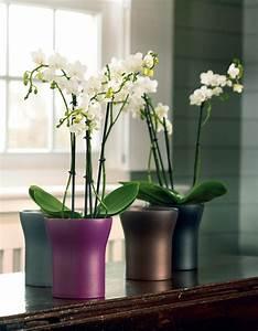 Cache Pot Orchidée : cache pot orchidee design ~ Teatrodelosmanantiales.com Idées de Décoration